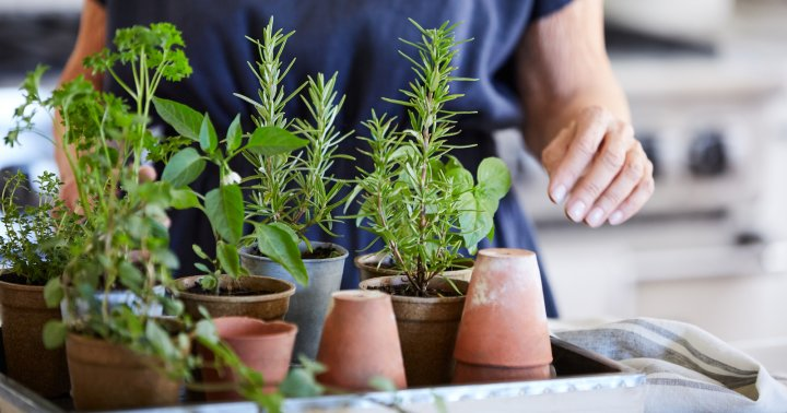 How To Herb Garden (Indoors & Outdoors) & 5 Best Herb Kits