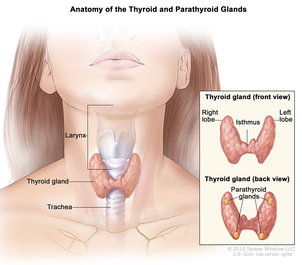 Your Open-Notes, Thyroid Exam