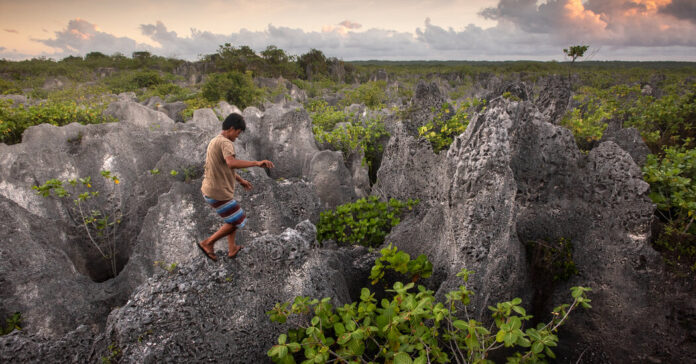 The Perilous Hunt for Coconut Crabs on a Remote Polynesian Island